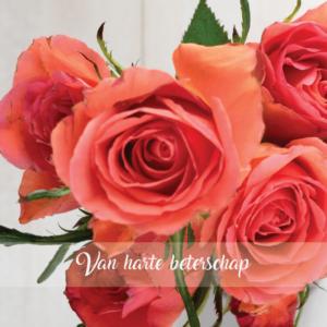 wenskaart roos